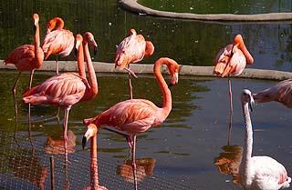 314 Розовые фламинго.   150k