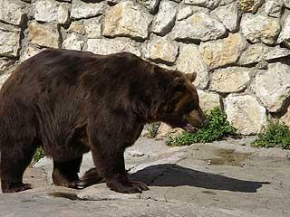 323 Медведь бурый.   202k