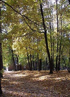 437 Парк «Сокольники».   326k