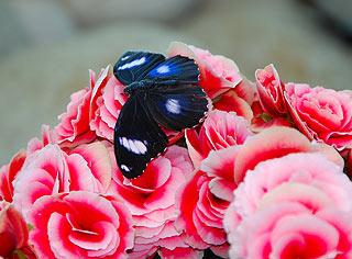 a134   Выставка тропических бабочек.    136k