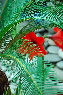 a138   Выставка тропических бабочек. Гиппеаструм, или амариллис    110k