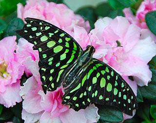 a144   Выставка тропических бабочек.    153k
