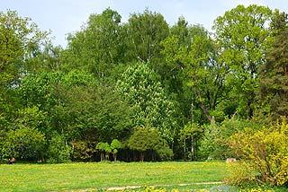 a148   Ботанический сад.   236k