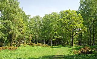 a157   Ботанический сад.  190k