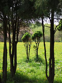 a161   Ботанический сад.   131k