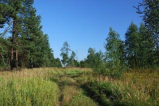 a347 Окрестности деревни Григорово.    192k