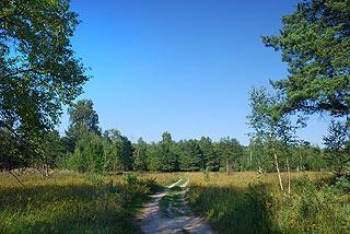 a351 Окрестности деревни Григорово.    170k