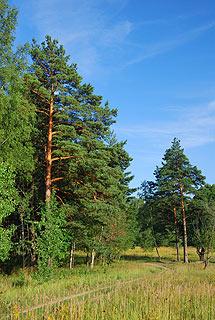 a356 Окрестности деревни Григорово.    180k